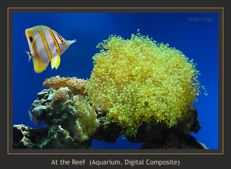 Tropical Fish at Reef (Aquarium + Composite)