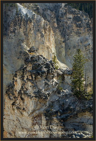 Lone Tree in Rocky Terrain at Yellowstone