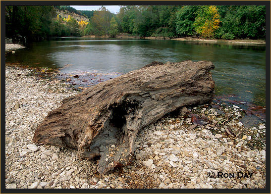 Driftwood near Peyton's Place on Illinois River