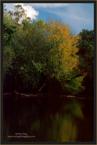 Autumn Tree, Illinois River